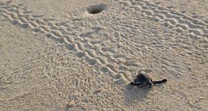 bebe tortue nosy-be 360